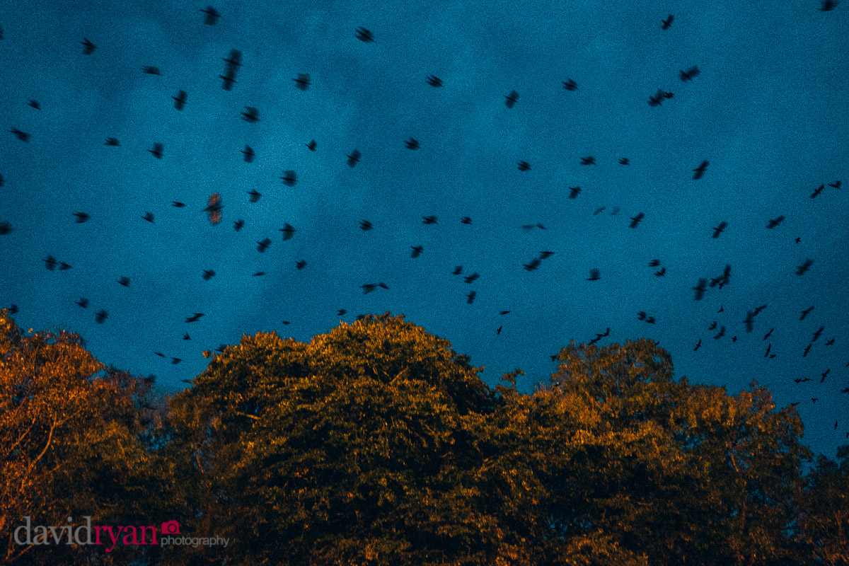 The Crows' Night Roost at Killashee House Hotel