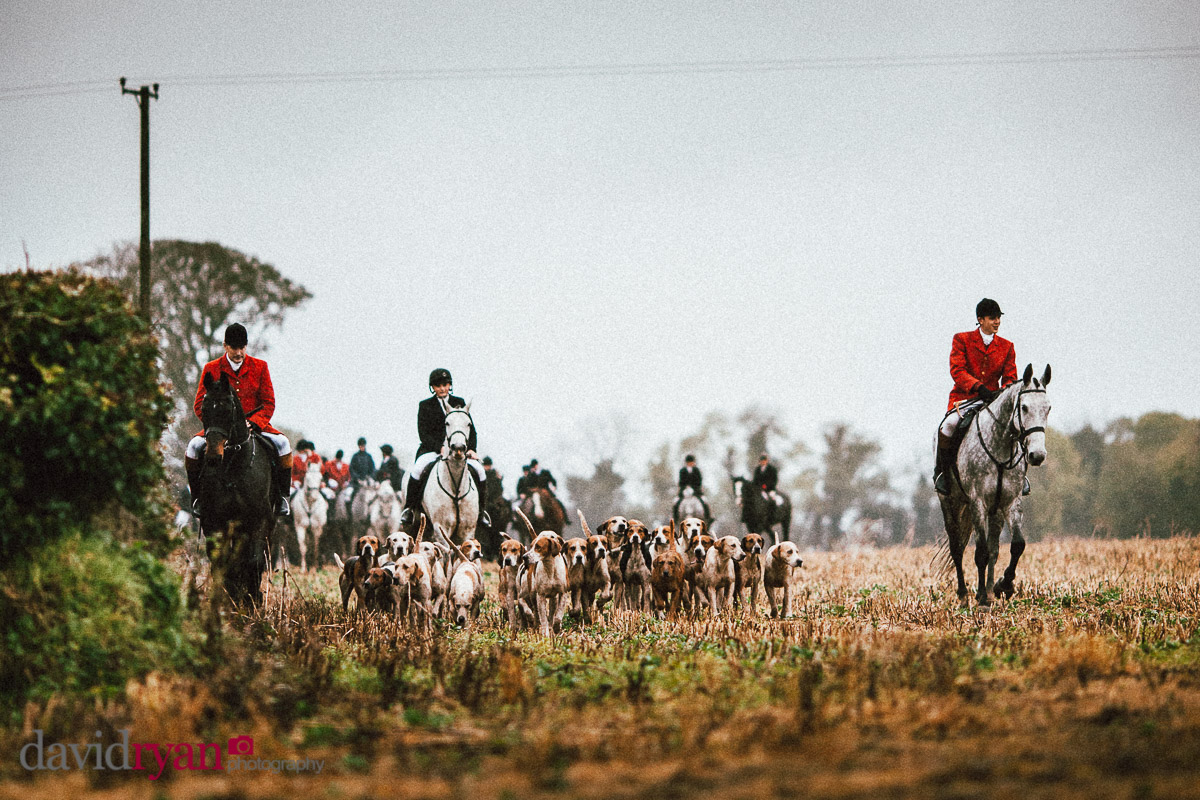 horses with hounds