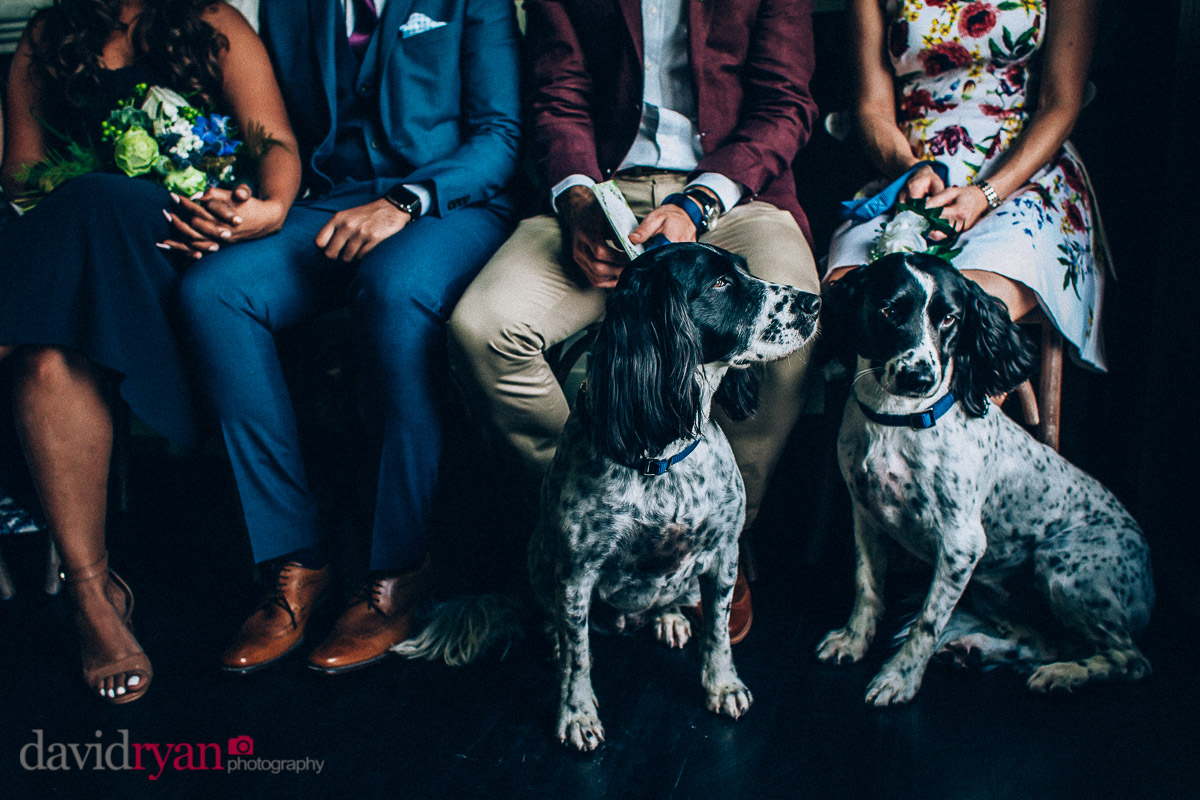 dogs at a wedding in virginia park lodge